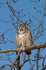 SK_2019_11_11 Owls 800 0309dncr.jpg