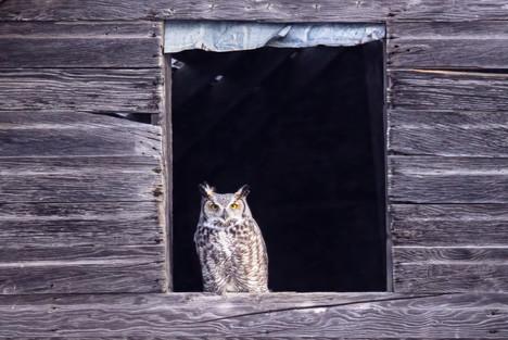 SK_2019_11_10 Owls 800 0742dncr copy.jpg