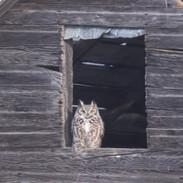 SK_2019_11_10 Owls 800 0510dncr copy.jpg
