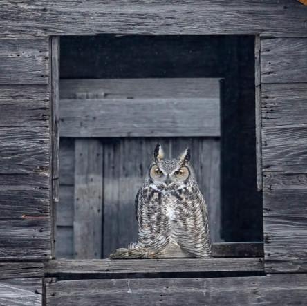 SK_2019_11_10 Owls 800 1027dncr copy.jpg