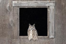 SK_2019_11_10 Owls 800 0398dncr copy.jpg