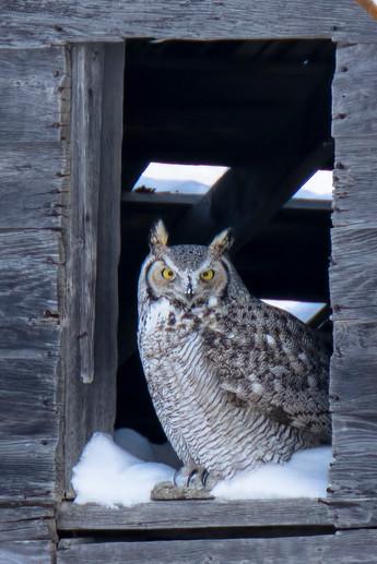SK_2018_12_31 Owls 364dncr.jpg
