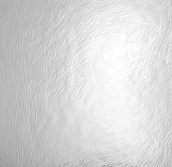 Chinchilla blanc