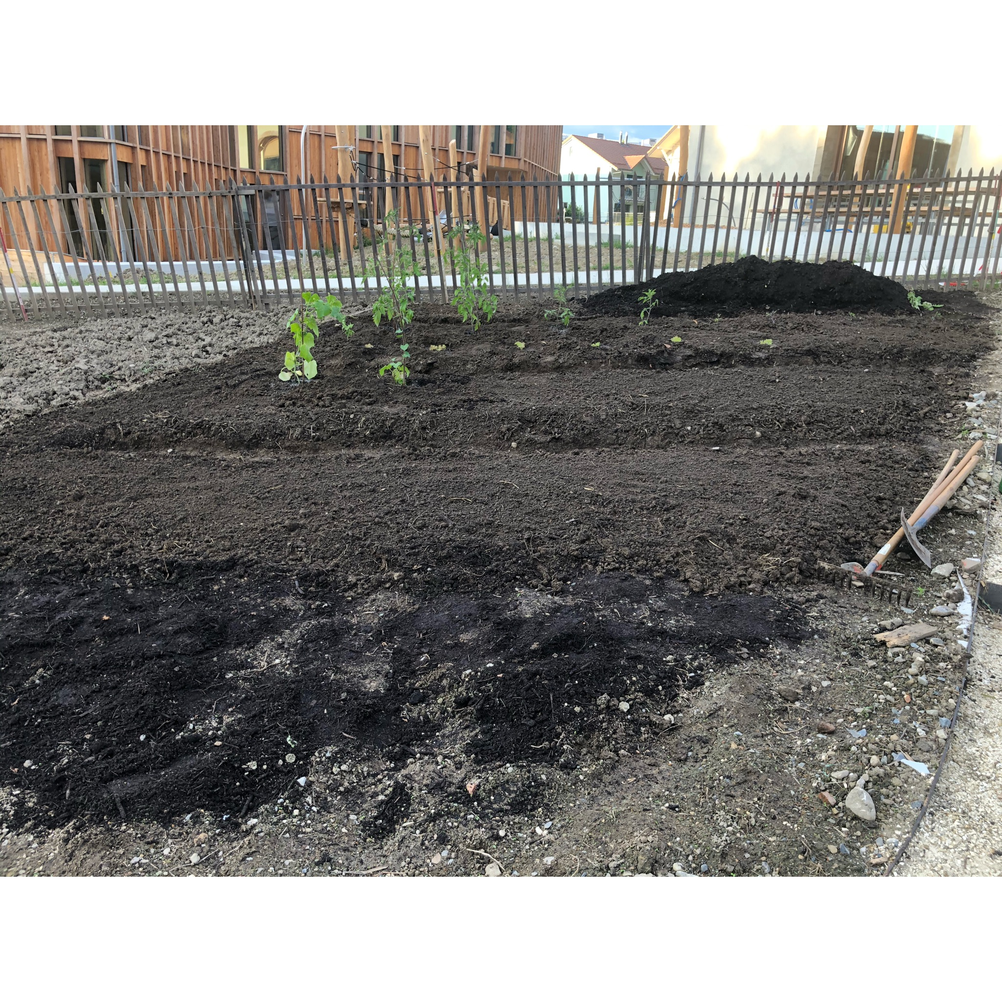 Potager_17_compost_et_1ère_plantation