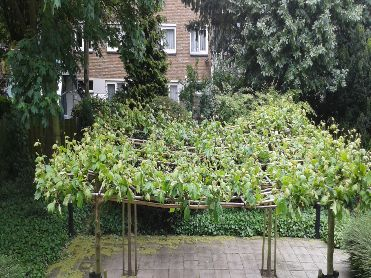 Backside garden