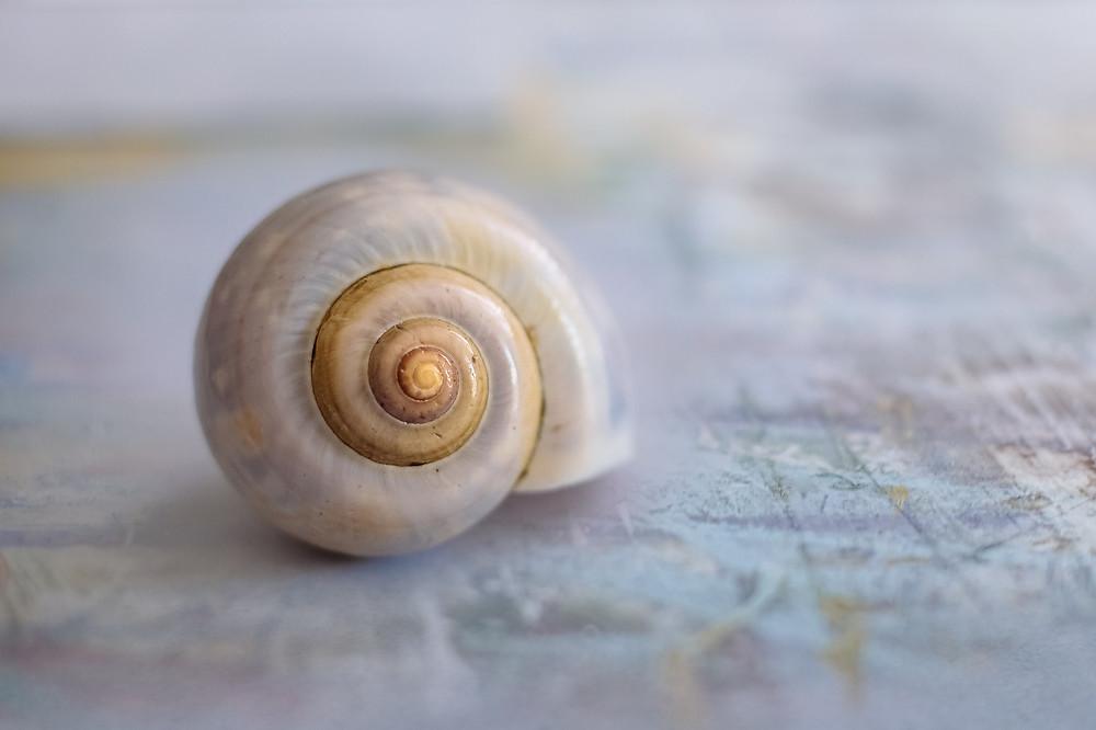 #escargot #geometriesacrée #coeurdenergie