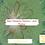 Thumbnail: Bain Vibratoire Electron libre