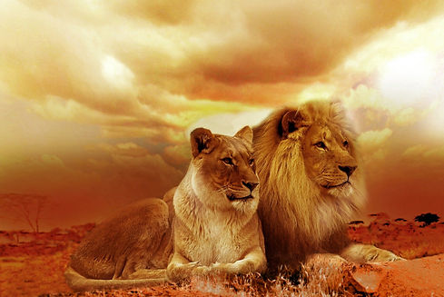 lions-577104_1920.jpg