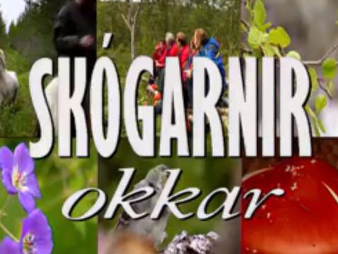 Skógarnir okkar, Vaglaskógur 1994