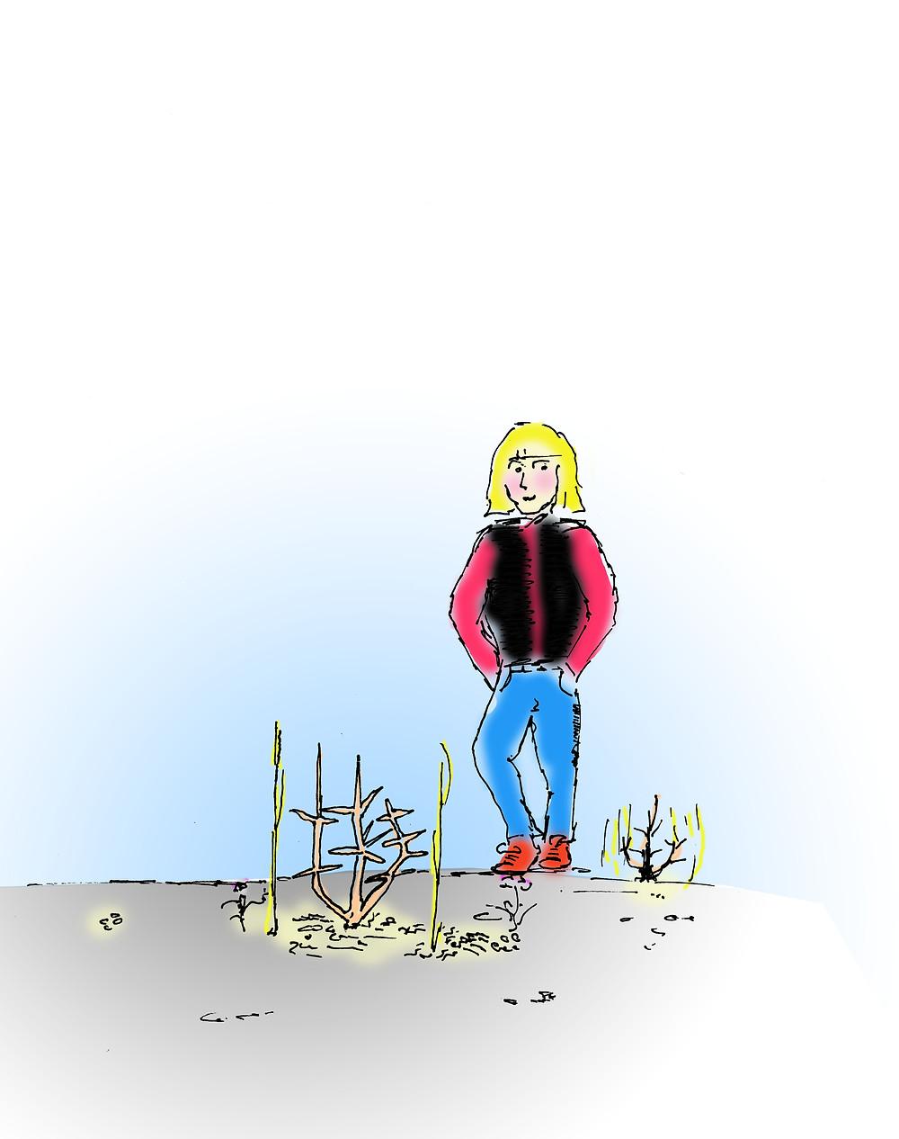Þegar trén eru lægri en hnéhæð er óæskilegt að klippa trén. Betra er að bíða í ár eða tvö og meta þá stöðina þar sem enn er hætta á t.d. næturfrostum við svörðinn.