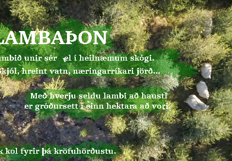 Lambaþon. Hvernig má auka verðgildi?