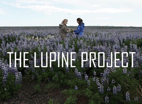 THE LUPINE PROJECT . IS
