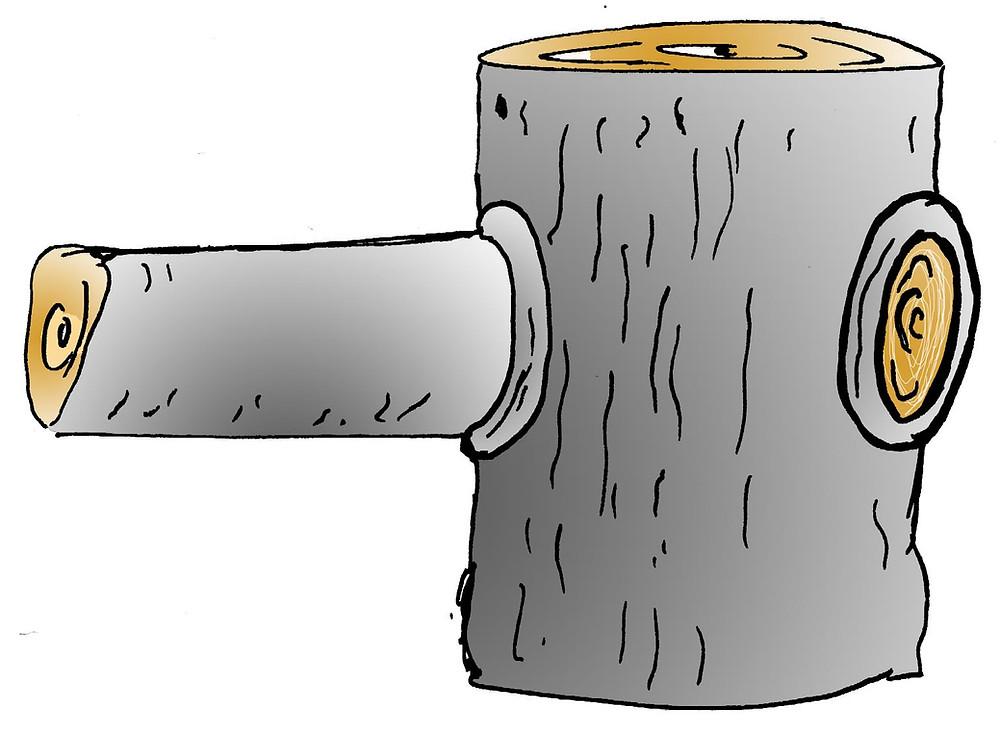Til hægri á myndinn má sjá hvernig skurður eftir sög á að líta út á furu.