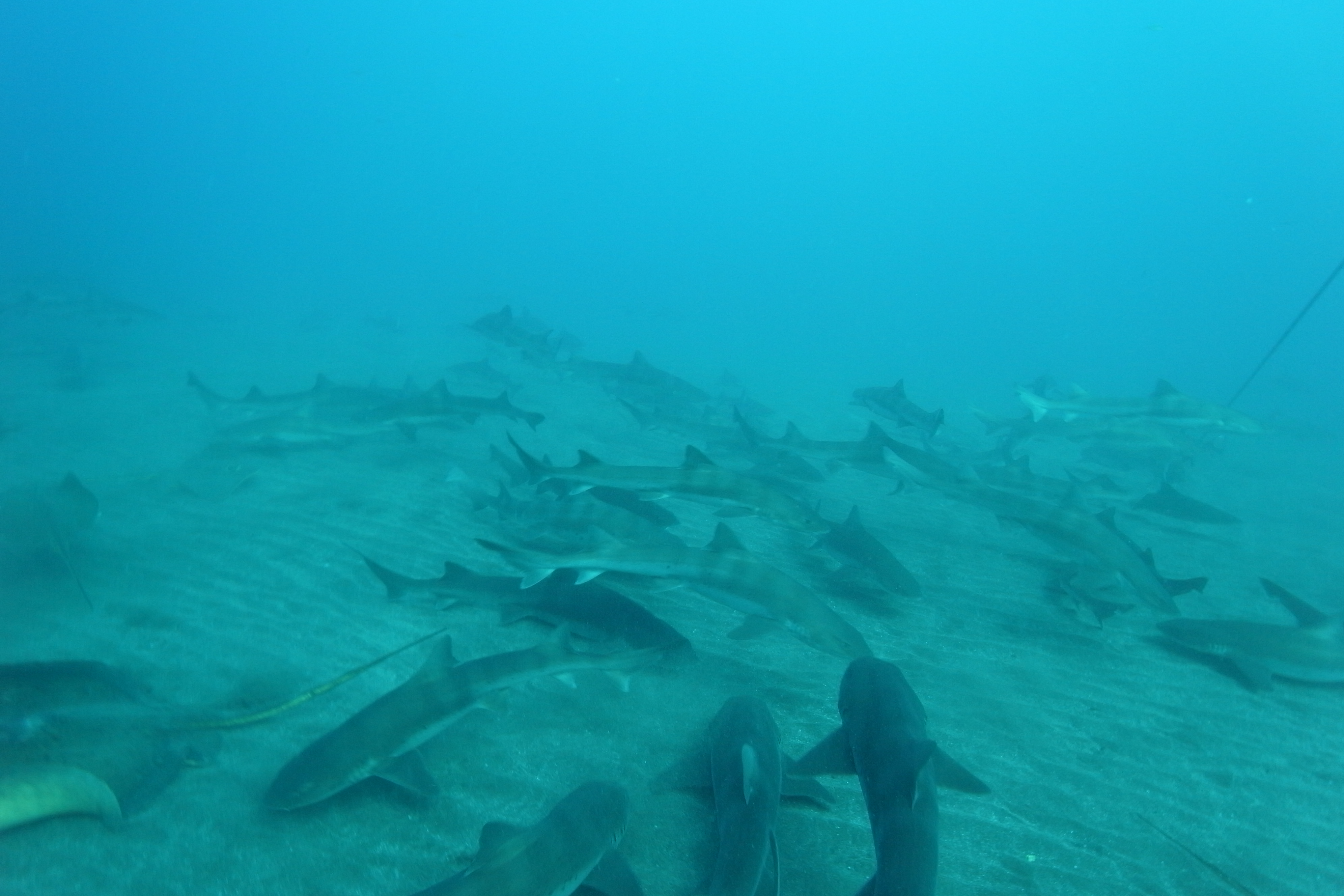 Shark-rayM0014613