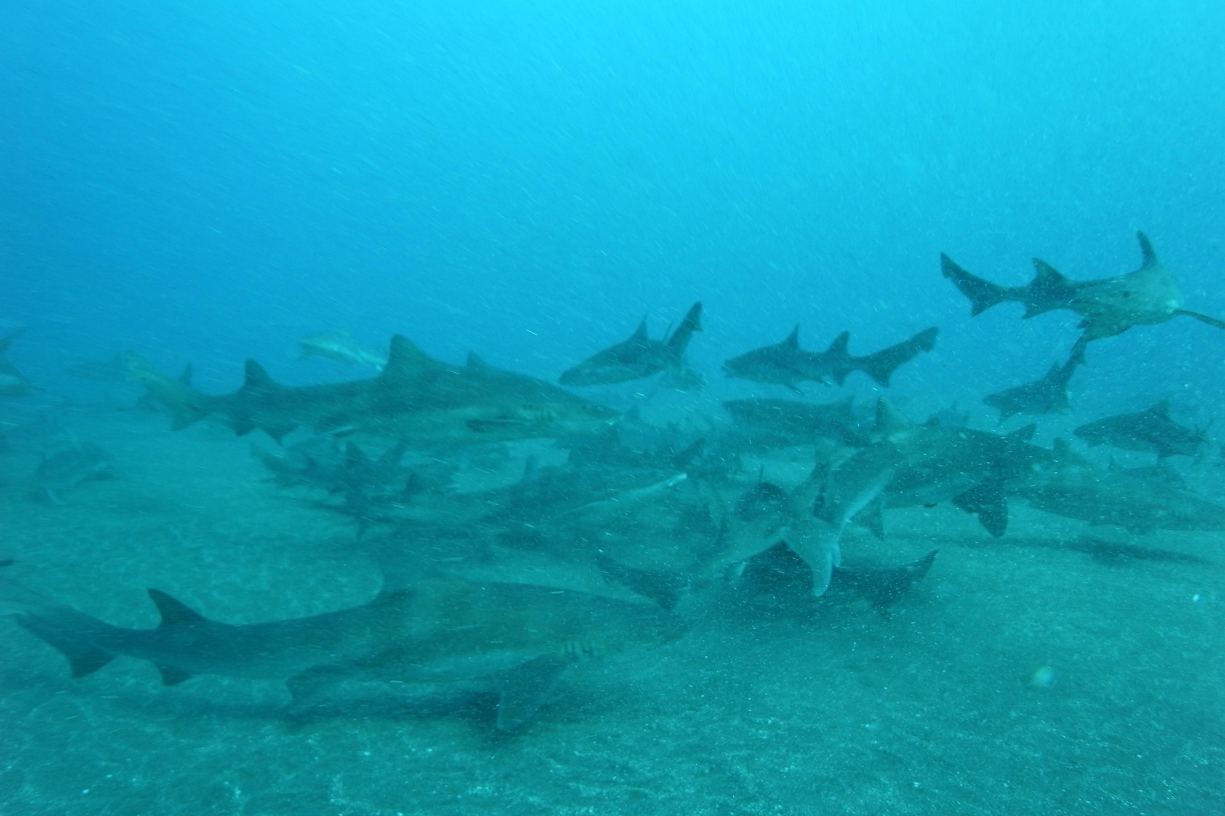 Shark-rayM0014756