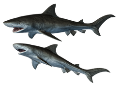 sharks_1_png_stock_by_jumpfer_stock-d6uhhbe (1)