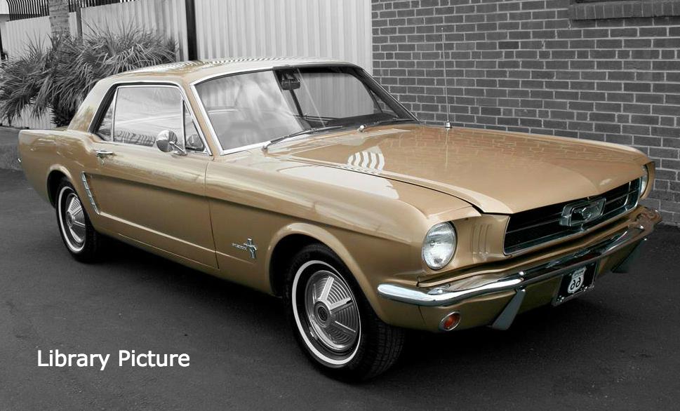Bronze Mustang Contrast