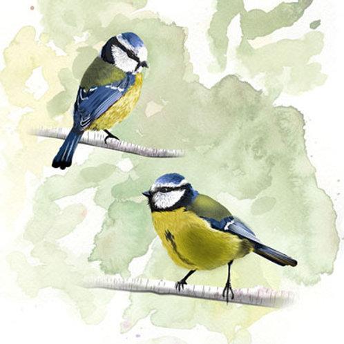 Fine Art Pimpel mezen illustratie (myrte)