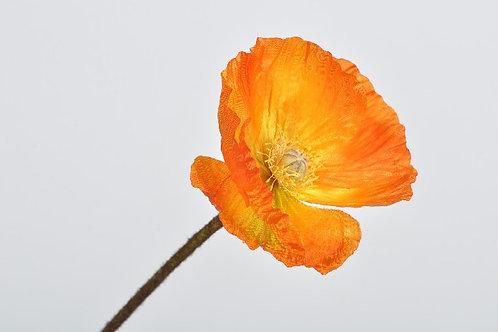 Klaproos steel oranje (zijdebloem)