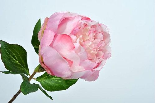 Pioen tak roze silkka (zijdebloem)