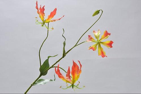 Gloriosa tak oranje  (zijdebloem)