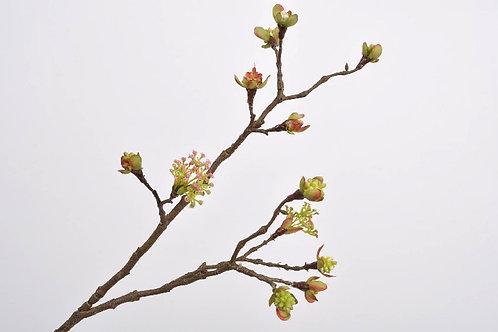 Bessentak esdoorn roze (zijdebloem)