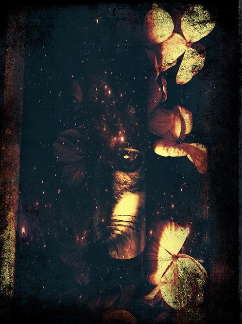 Dark Warrior Queen Morrigan Anointing Spell Oil