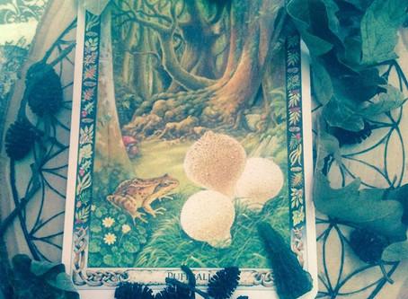 Druidic lessons of Puffballs