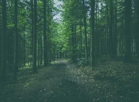 Calling the four quarters of Trees, the Sacred Grove