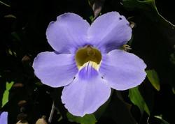 Flower in Jaco
