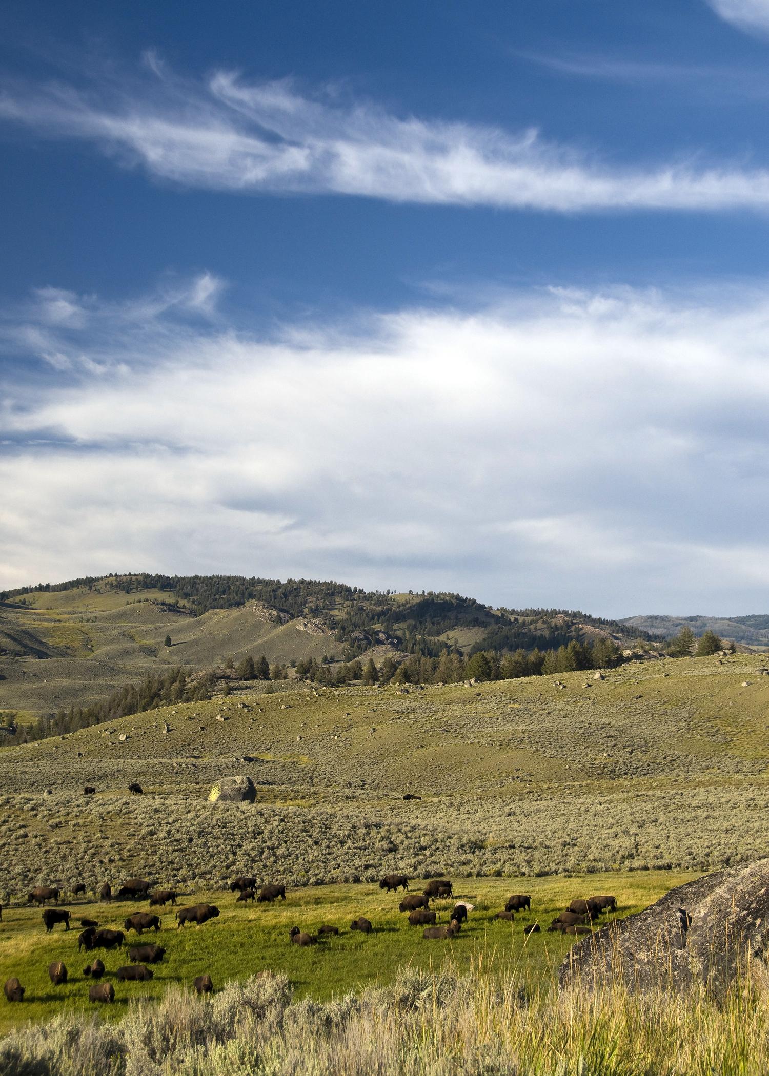 Lamar Valley (YNP)