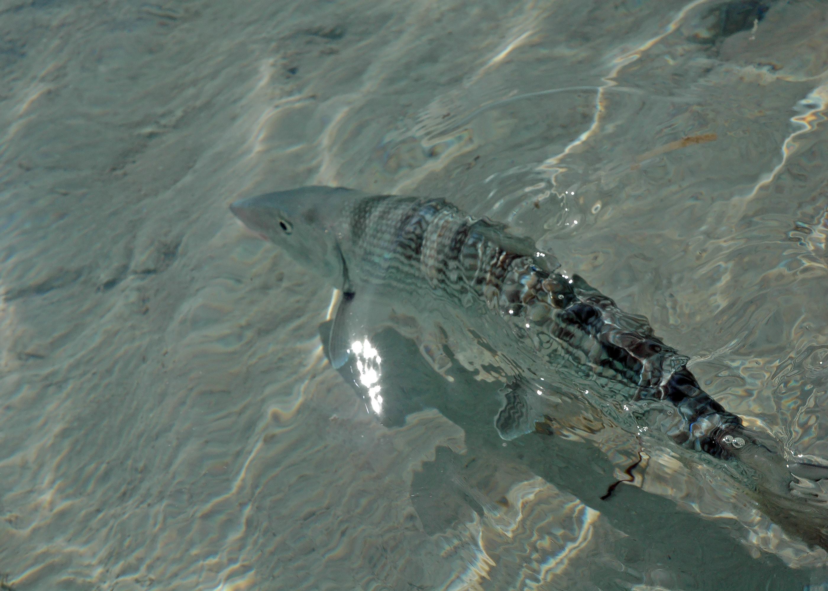 Underwater Release