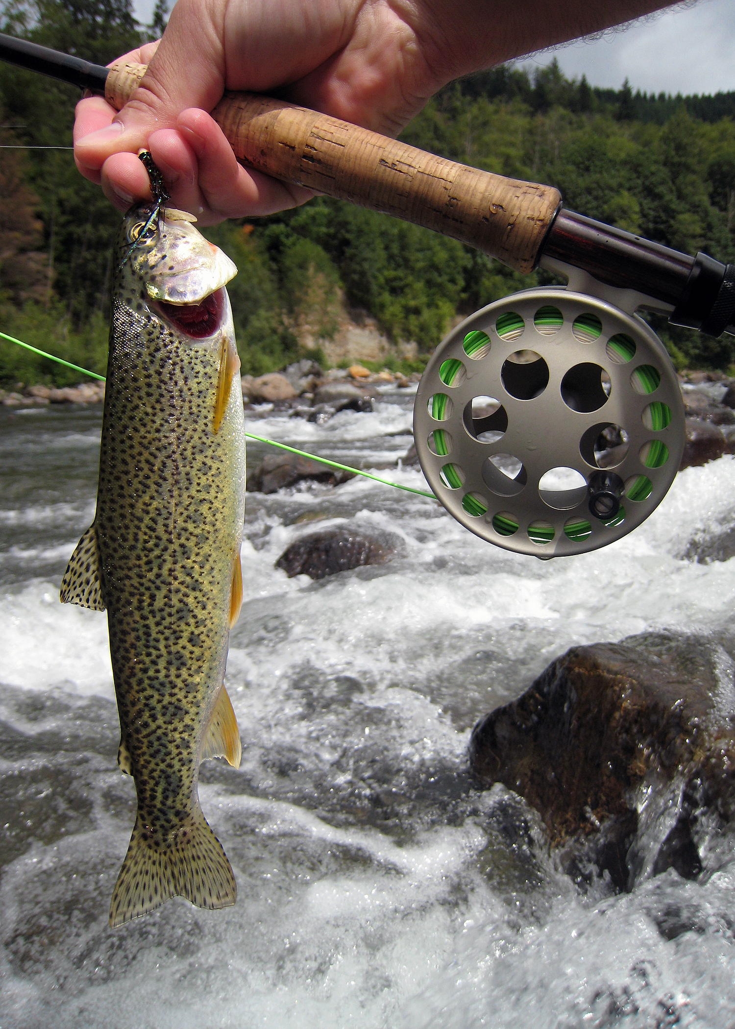 Middle Fork (Cutthroat)