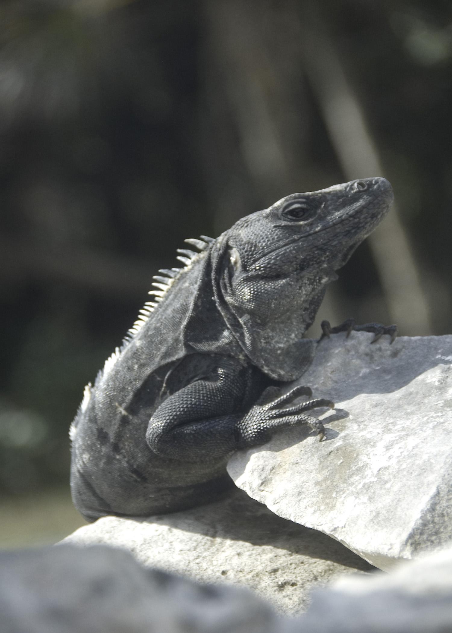 Pedro (Tulum)