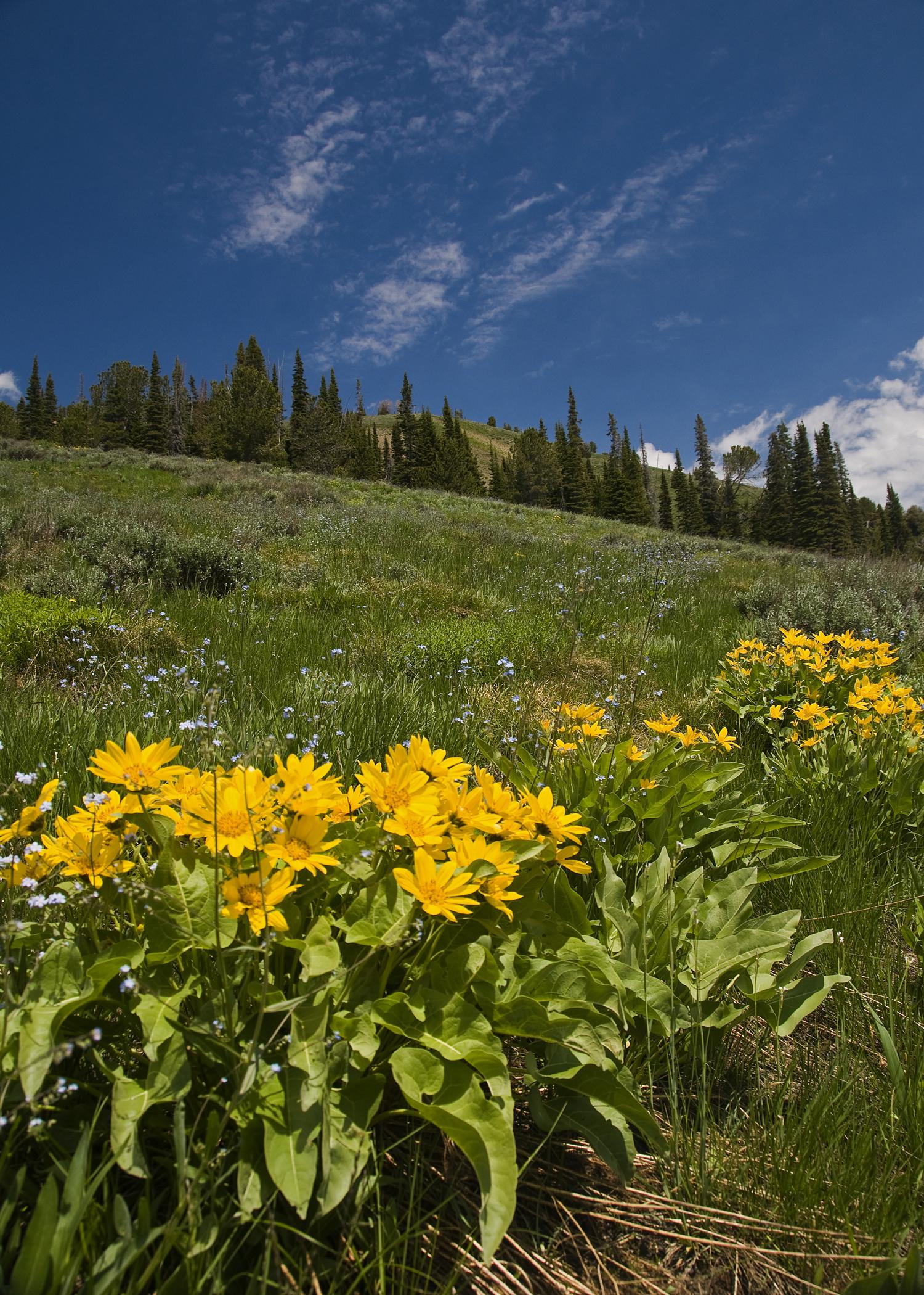 Baker Lake Trail