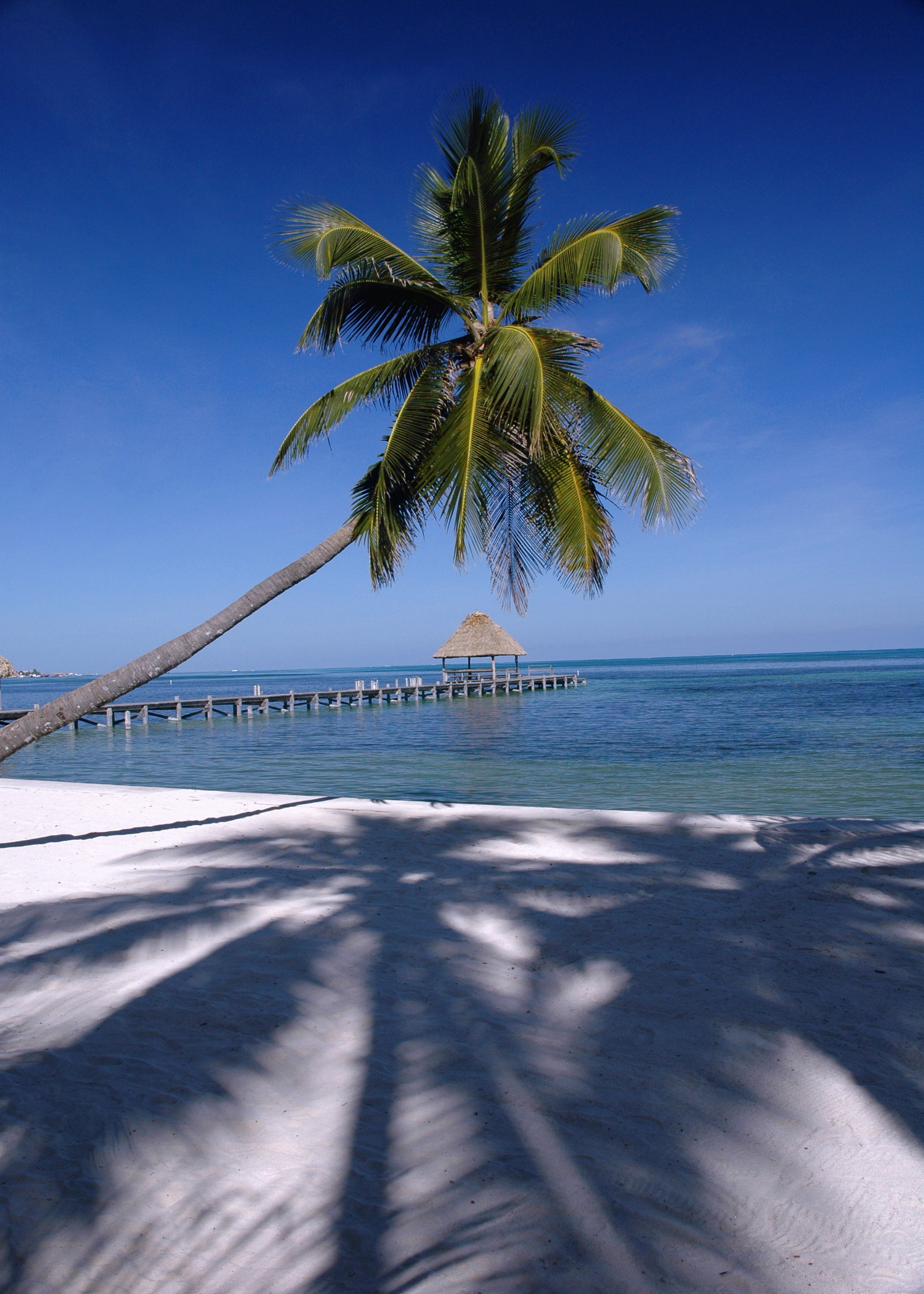Palm Shadows (Ambergris Caye)