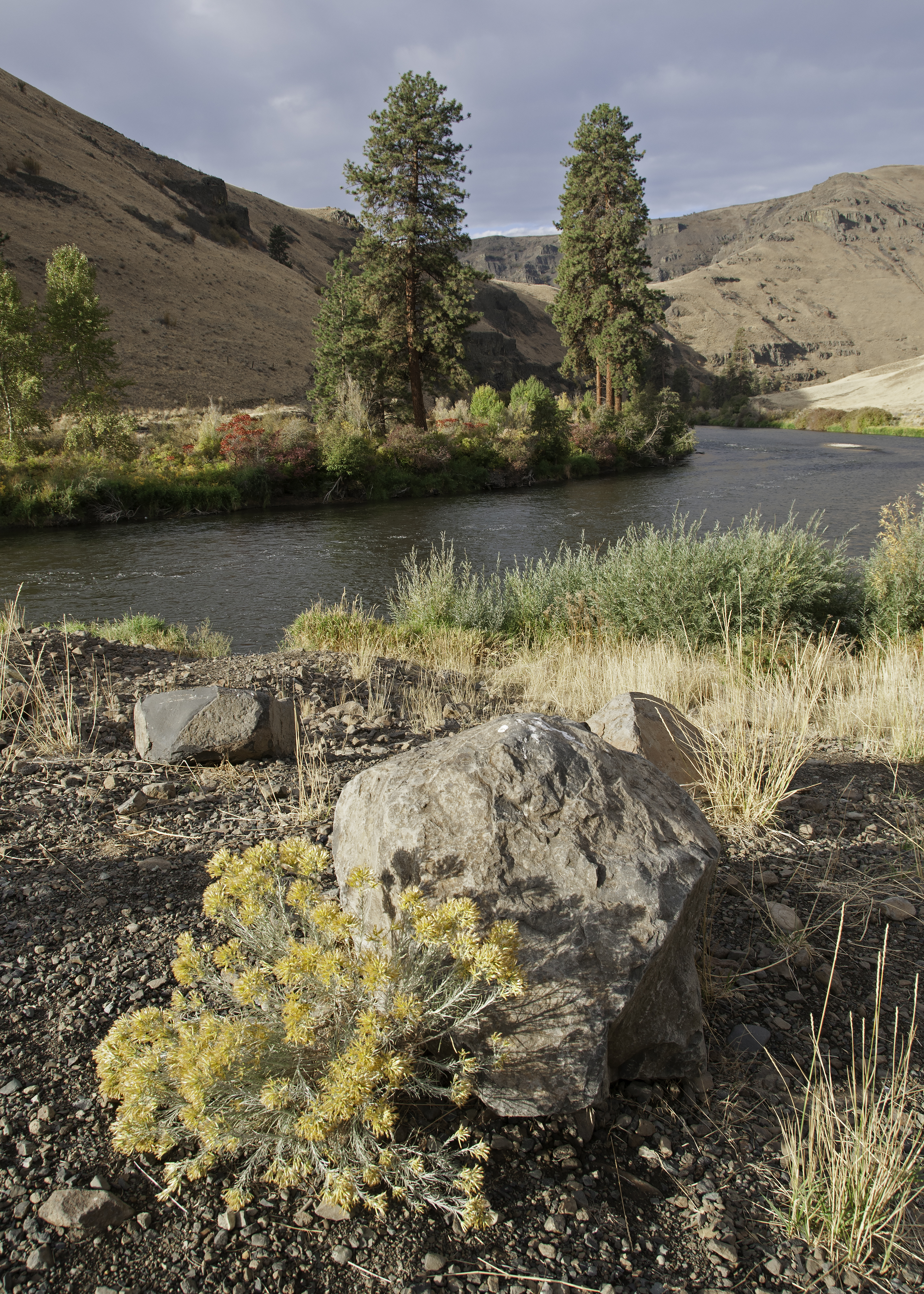 Yakima River in the Summer