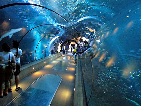 Aquarium-in-New-York-City-New-York.jpg