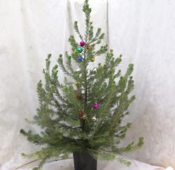 """Chris Tal - """"Christmas Tree"""""""