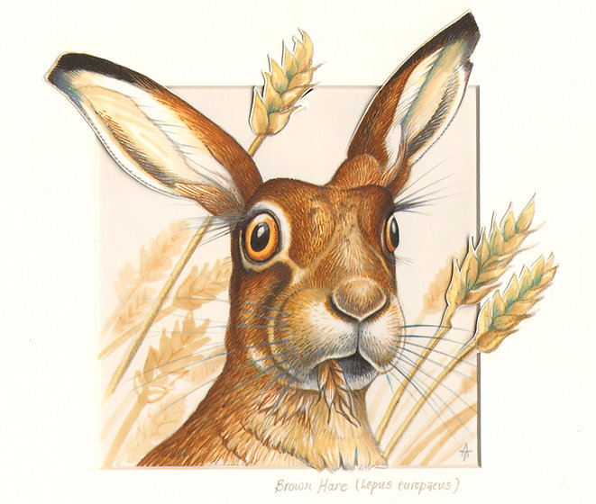 Painting of a Brown Hare