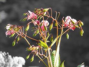 Neophyten1.jpg