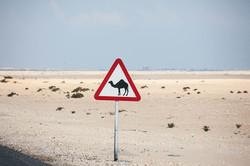 70-Desert-RasLaffan_5313