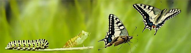 Papillon_edited_edited_edited.jpg