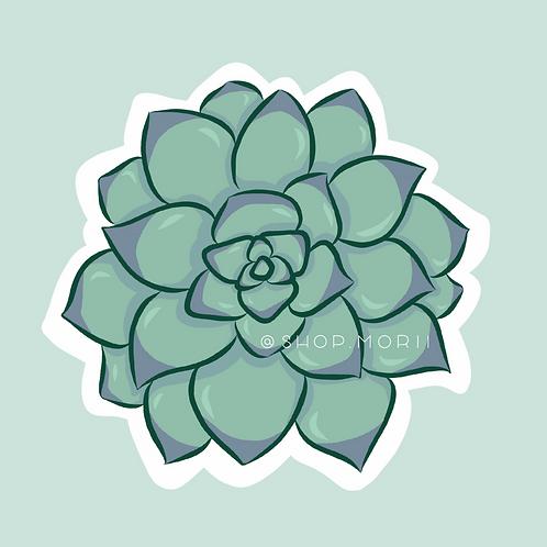Dudleya Succulent Sticker