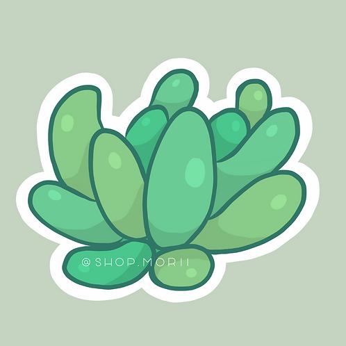 Stonecrop Succulent Sticker