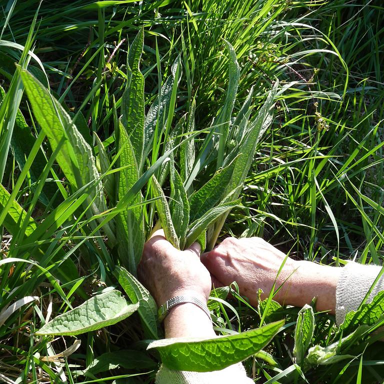 Stage plantes sauvages comestibles 3 jours. Cueillette, cuisine, botanique et ethnobotanique.
