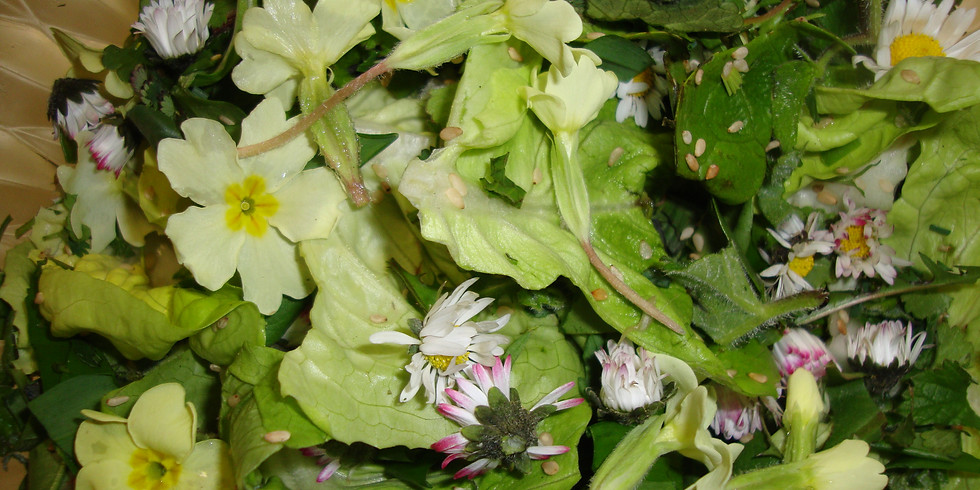 Stage yoga, naturopathie et plantes sauvages comestibles 3 jours