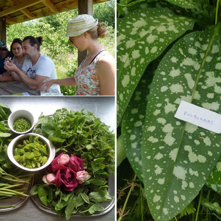 """Stage plantes sauvages comestibles en Touraine - (intensif 3 jours) - Avec la """"Forêt Gourmande"""""""