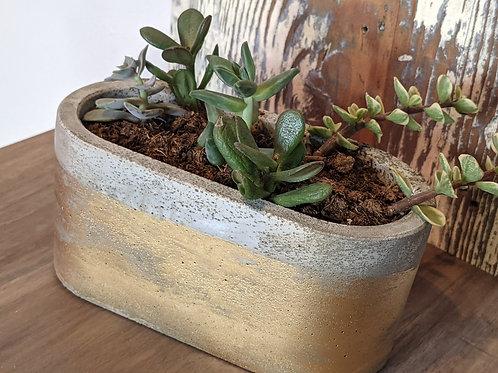 Concrete Planter with Succulent