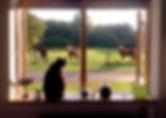 Udsigten fra huset ud på folden, hvor hestene går og græsser